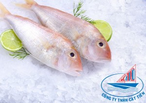 Gold threadfin bream fish
